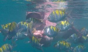 snorkeling in manuel antonio costa rica