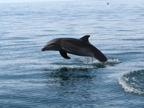 Dolphin Watching Tour Manuel Antonio Costa Rica